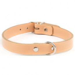 Dog Collar Nº1